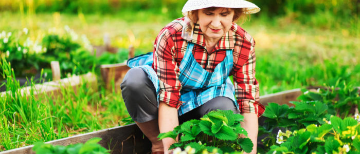 jardinage senior